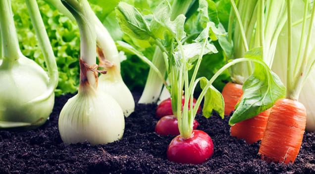Simple vegetable garden tips for every size gardens